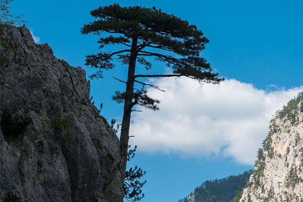 black-pine-nomad-tours-montenegro
