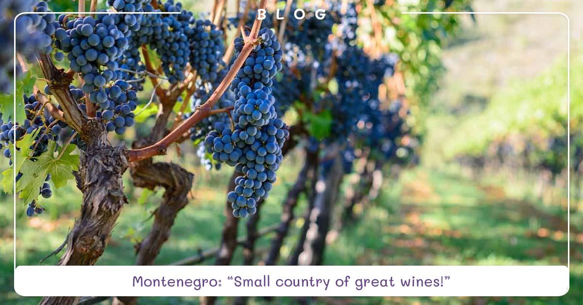 blog-montenegrin-wines